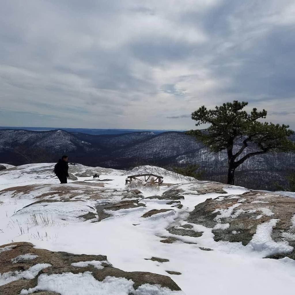 Bear's view